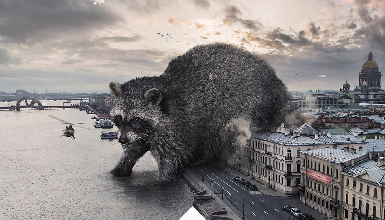 Raccoon Vadim Solovyov